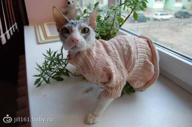 вязаная одежда для кошек и